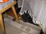 Ares versteckt sich mit seinem Gummiball hinterm Vorhang!