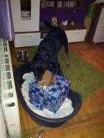 Ares liebt es Packerl aus zupacken!