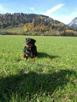 Ares 9,5 Jahre