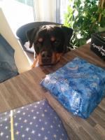 Ares will auch ein Packerl
