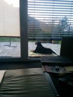 Ares auf seinem Aussichtsplatz