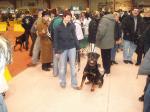 Ares 1 Jahr bei der Hundemesse in Graz