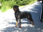 Ares mit 19 Monaten!