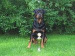 Ares ganz stolz! Den Pokal hat er sich bei der FH1 Prüfung erarbeitet!