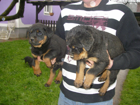Rottweiler - Besuch in Edelsee!