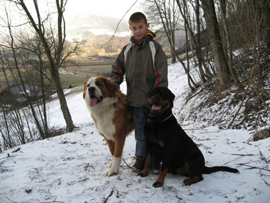 Rottweiler - Lucky, Andreas und Ares
